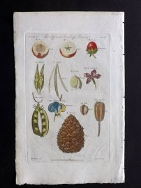 Thornton 1812 Hand Col Botanical Print. Different kinds of Pericarp